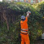 maiori manutenzione verde via capitolo