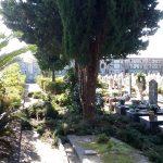 Cimitero comunale Maiori manutenzione verde
