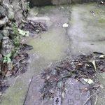 Maiori pulizia San Pietro