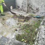 Minori taglio pulizia