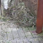 Minori taglio pulizia via Petrelle