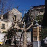 Maiori Potatura in piazza San Pietro