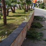 Taglio erba e potatura palme discesa del porto