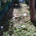 Taglio,potatura e concimazione aiuole giardinetti piazza San Giacomo