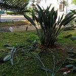 Manutenzione del verde presso ingresso Corso Reginna e monumento ai caduti