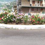 Taglio e irrigazione zona lungomare G. Capone e Costa D'angolo