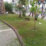 Taglio giardini presso fontana artistica e aiuola fronte lungomare