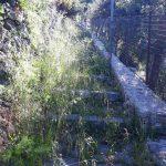 Taglio e spazzamento in Via delle Querce
