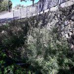 Taglio e spazzamento presso chiesa di San Pancrazio