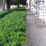 Cimitero comunale Maiori spazzamento e pulizia, irrigazione