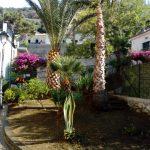 Erchie pulizia,taglio e potatura palme nonché piantumazione piante di lantana
