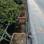 Inizio pulizia vasi corso Reginna e irrigazione verde urbano Maiori