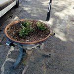 Sostituzione sostegni vasi; pulizia vasi; piantumazione begonie; completamento taglio con pulizia rose in Villa Comunale Maiori