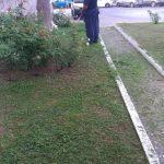 Maiori irrigazione giornaliera e taglio 10