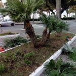 Maiori taglio e potatura piante zona giardinetti via Cristoforo Colombo