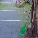 Maiori taglio e sfoltitura piante